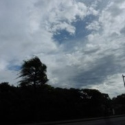 台風( ;´Д`)