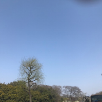 もうすぐ春(*´ω`)