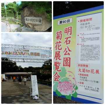 ■第90回菊花展&第40回農林漁業祭~兵庫県立明石公園~■