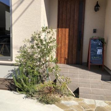玄関前でオリーブの収穫
