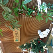 ■クリスマスツリー■
